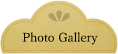 Photo Gallerys